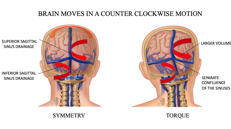 CFD Brain Counter Clockwise