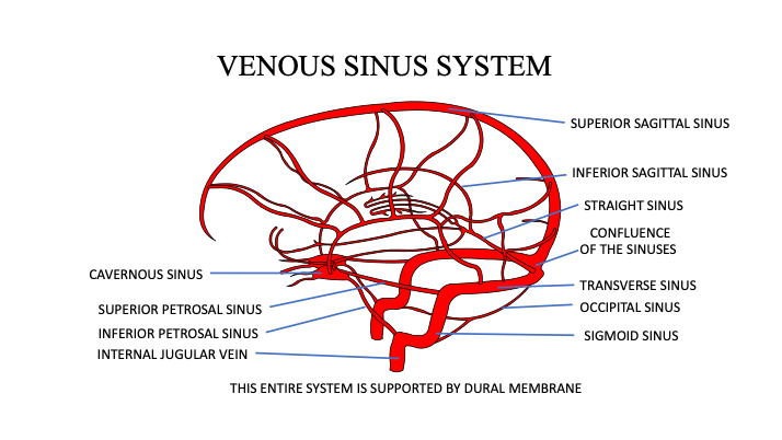 CFD Venous Sinus System